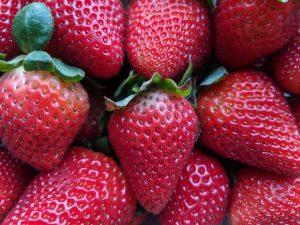 Fresh Red Juicy Strawberries